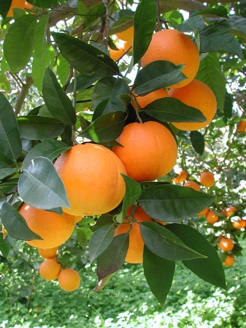 Il mangiar bene a partire dalla frutta